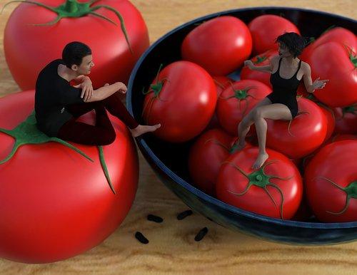 tomato  vegetable  fruit