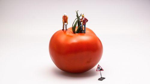 tomato food vegetable