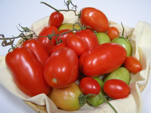 tomatoes tomato crop red