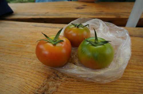 fruit fresh tomatoes red