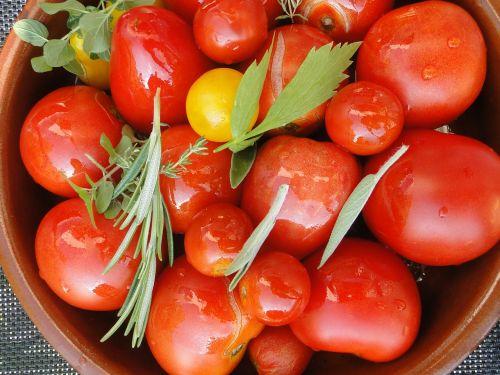 tomato harvest tomatoes herbs