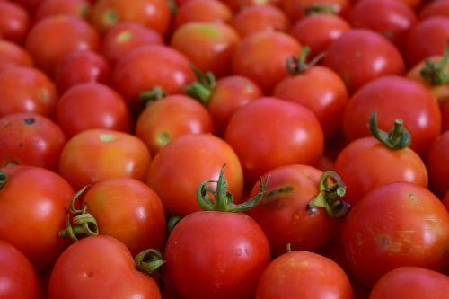tomatoes background red