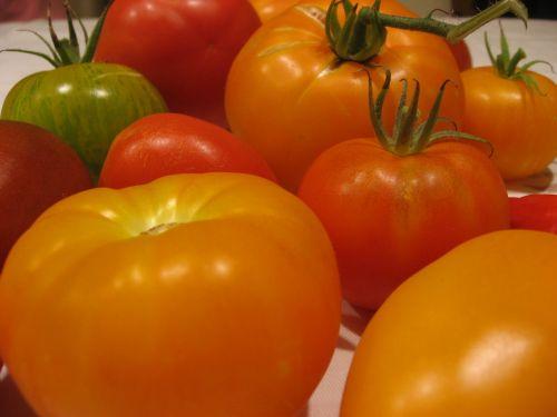 tomatoes varieties diversity