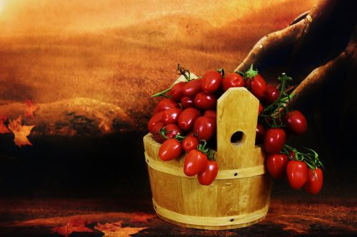 tomatoes wooden bucket collect