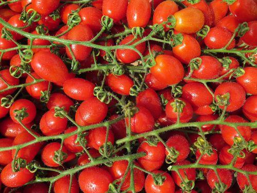 tomatoes cherry tomatoes bio