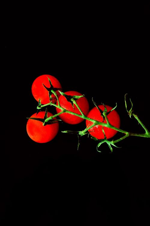 tomatoes red vegetables