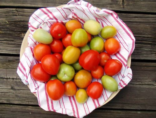 tomatoes autumn eat