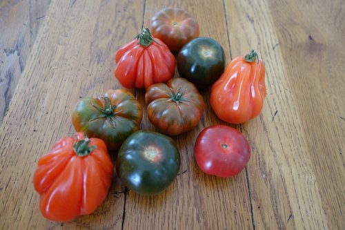 tomatoes  rare varieties  vegetables