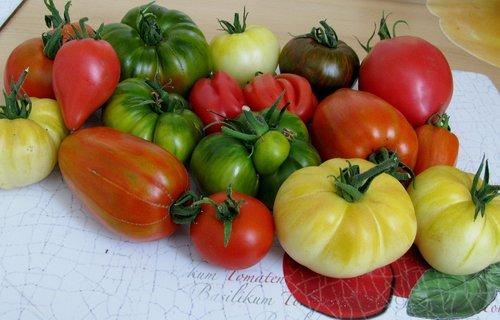 tomatoes  diversity  vegetables