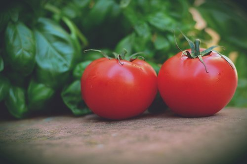 tomatoes  trusses  bush tomatoes