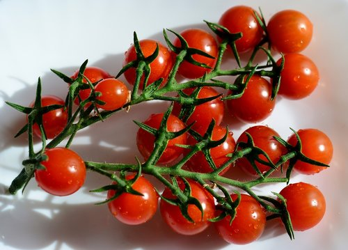 tomatoes  panicle  red
