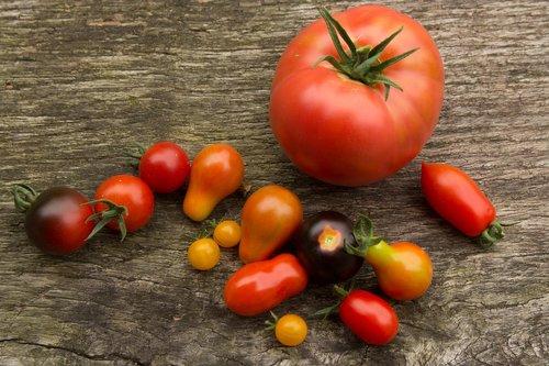tomatoes  tomato  vegetables