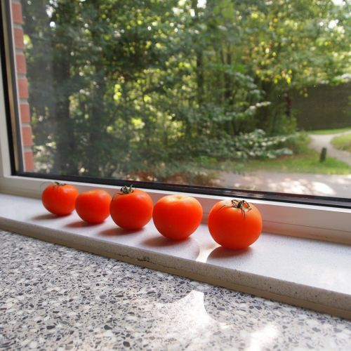 tomatoes window sill red