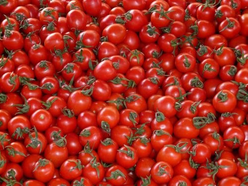 tomatoes vegetables red