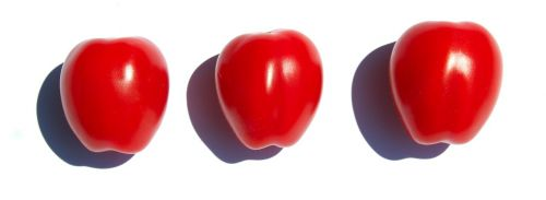 tomatoes align red
