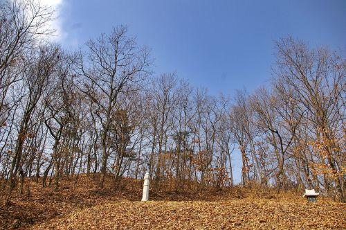 tomb gravestone wood