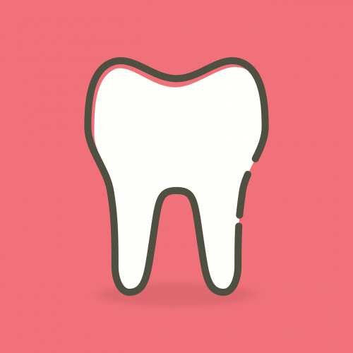 tooth dentist tooth enamel