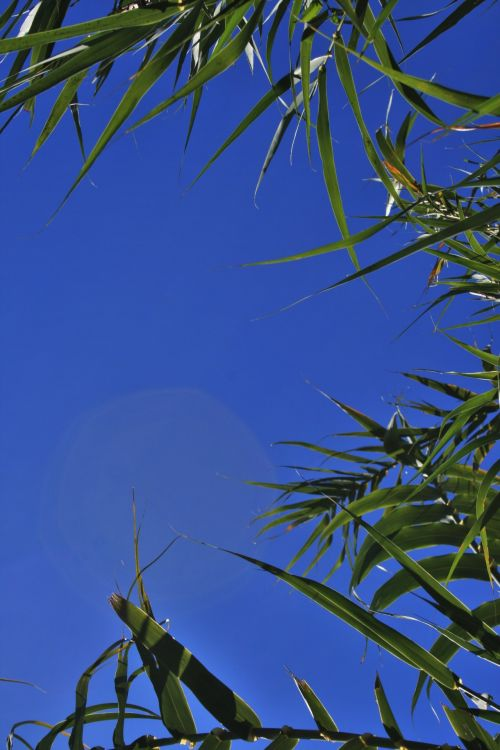 Top Of Reeds