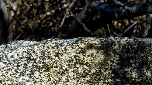 Top Of The Granite Rock