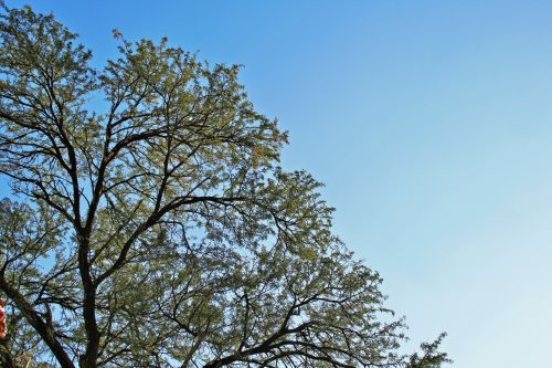 Top Of Thorn Tree