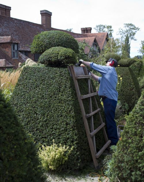 topiary electric hedge trimmer gardener