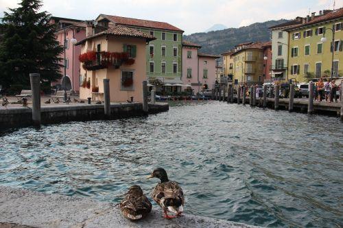 torbole port ducks