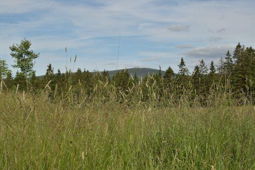 torfhaus lower saxony meadow