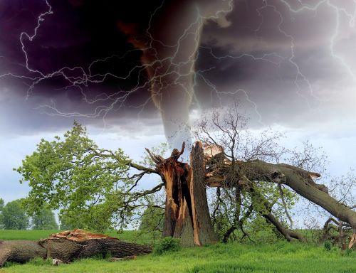 tornado storm tree branch