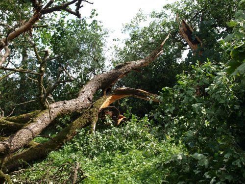 tornado damage tree force of nature