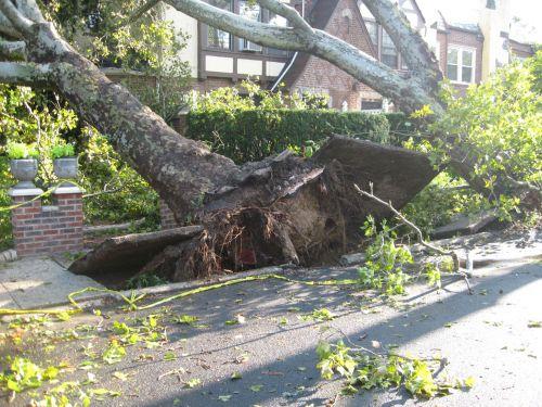 Tornado In Queens