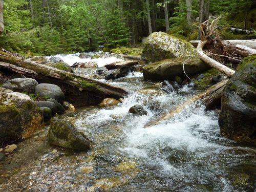torrent drift wood rock