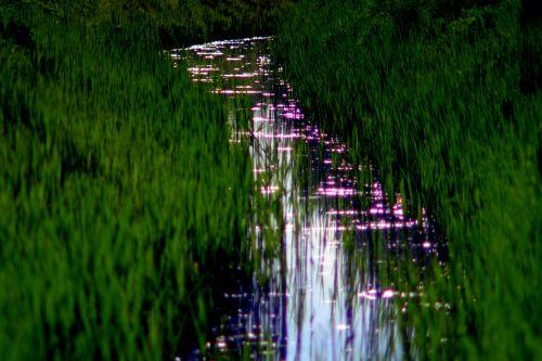 torrent the brook overgrown