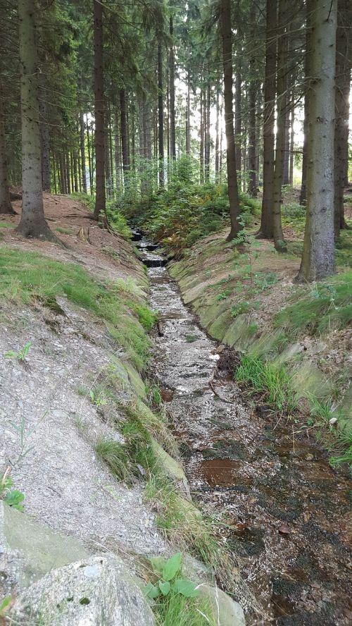 torrent forest inlet