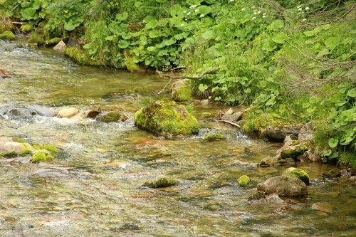 torrent  mountains  mountain stream