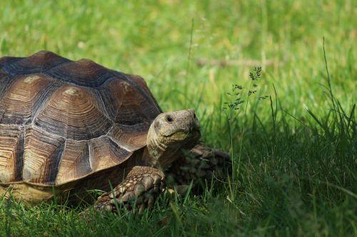 tortoise turtle reptile