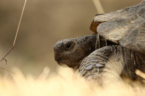 tortoise animal slow