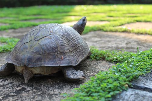 tortoise reptile tropical