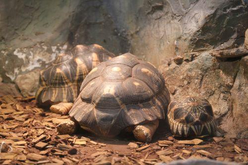 tortoise turtle zoo