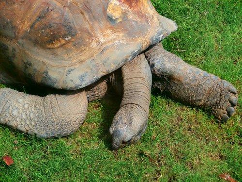 tortoise  turtle  turtle giant