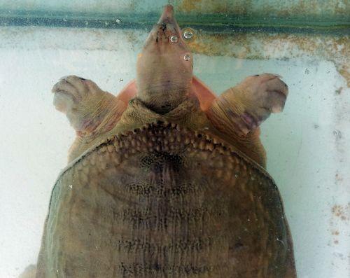 Tortoise Breath Under Water