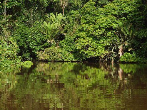 tortuguero nacionalinis parkas,Kosta Rika,tropikai,Nacionalinis parkas,džiunglės,atogrąžų miškai,veidrodis,vanduo