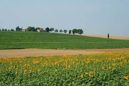toscana italy meadow