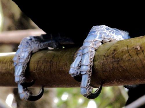 toucan claws bird