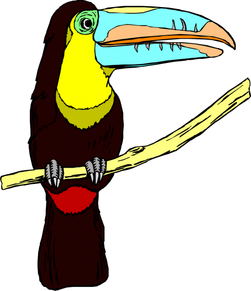 toucan bird wildlife