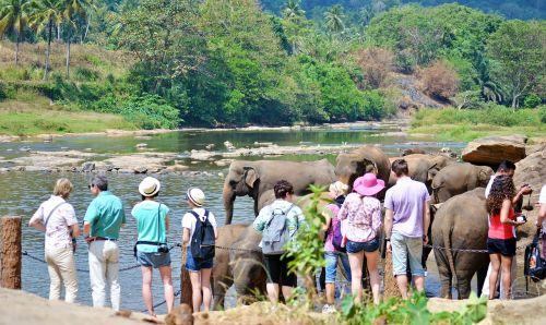 tourists tourist attraction elephants