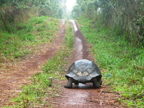 towards turtle solitude