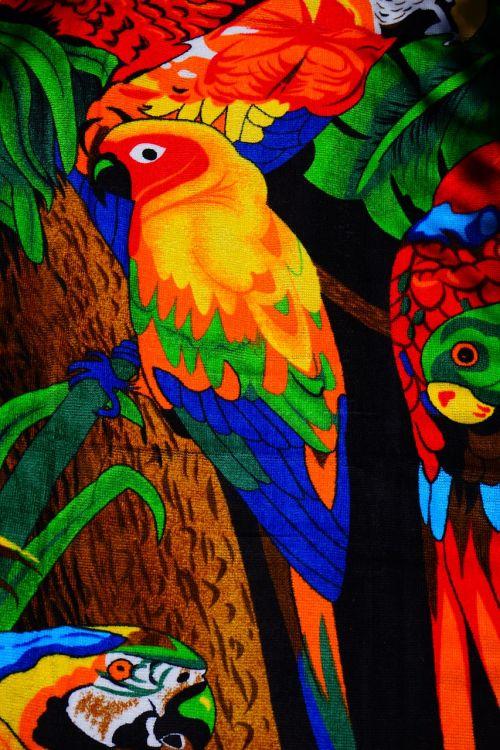 towel lori parrot