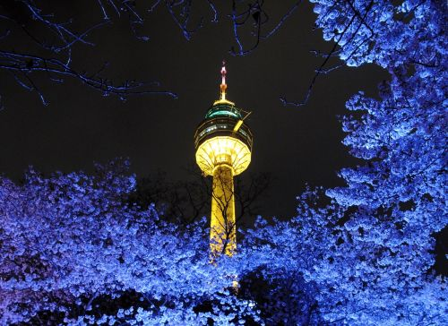 tower beoc flowers night view