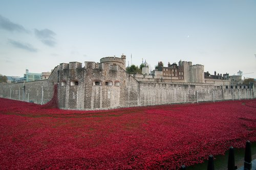 tower of london  remembrance  november