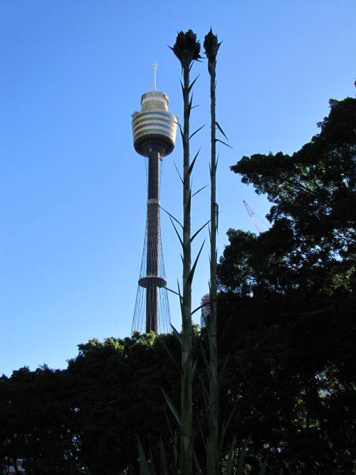 Towering Plants
